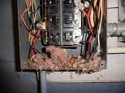 A mouse dwelling was found inside the main electrical panel of a home during an inspection by Greg Kolar of Keystone Home Inspections